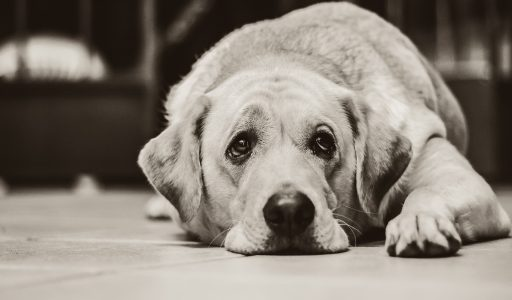 A pet's death can hurt more than losing a fellow human