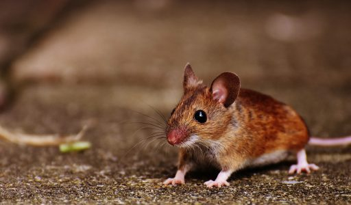 Personalized Cancer Vaccine Shows Promise in Mice